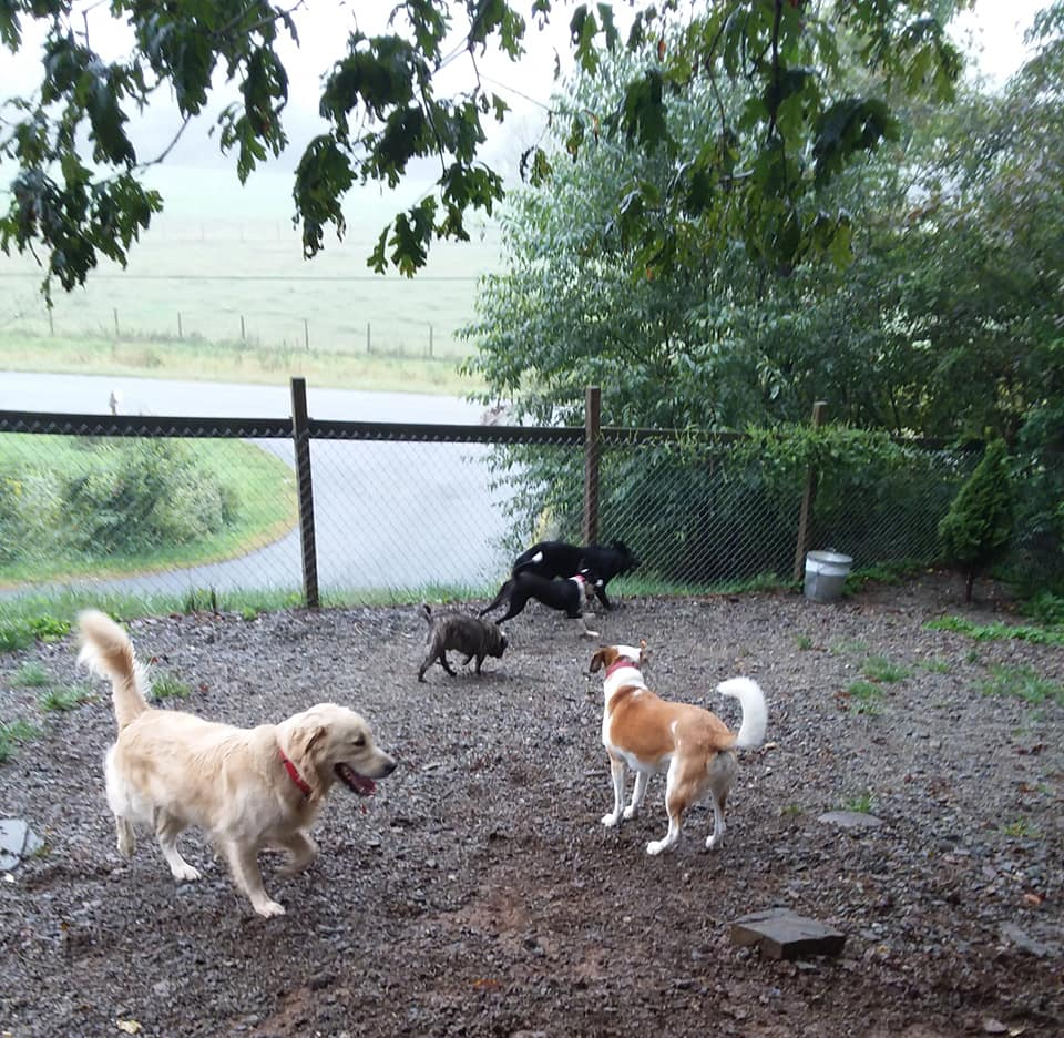 woof pack dog boarding kennel in boone nc