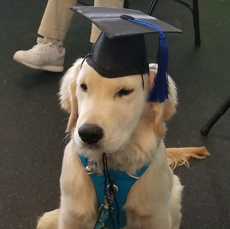 dog training dog trainers boone nc - woof pack pet services - dog with graduation cap