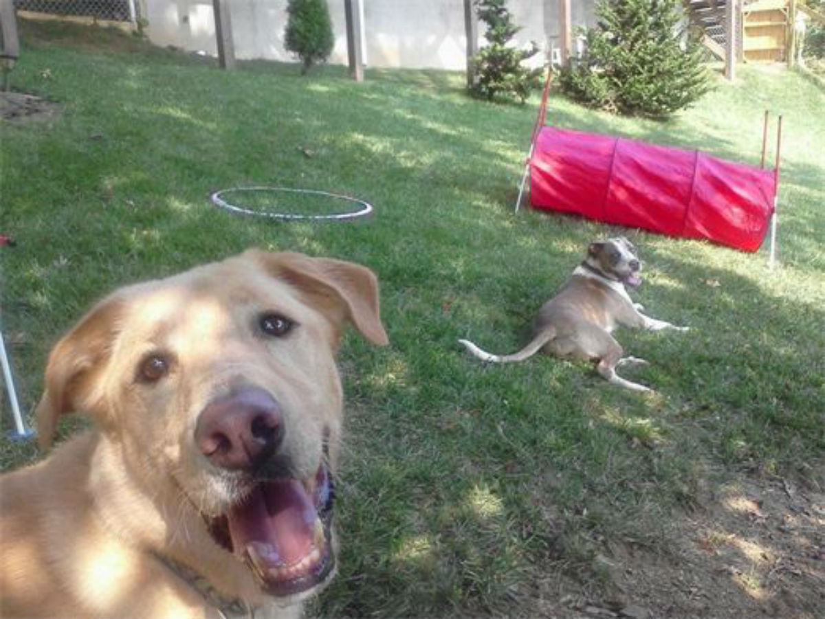 two happy dogs at doggie daycare in boone nc - woof pack pet services