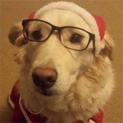 dog with glasses and santa cap for christmas in boone nc