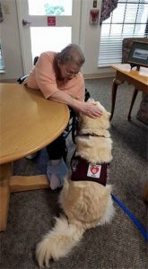 therapy dog training - navi at glenbridge rehabilitation center - boone nc